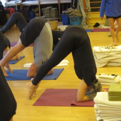 Preparing for Sirsasana (headstand)